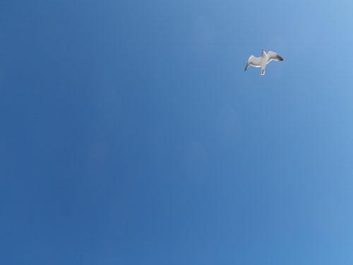 See? Gull!