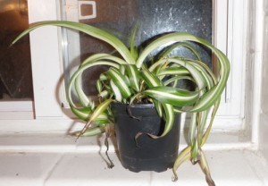 Plants: My new toxic avengers