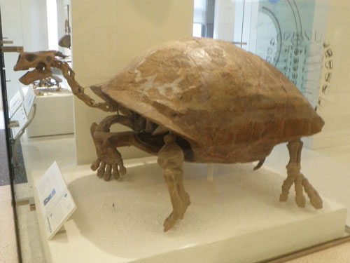 Big, old, turtle