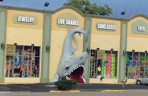 Shark door!