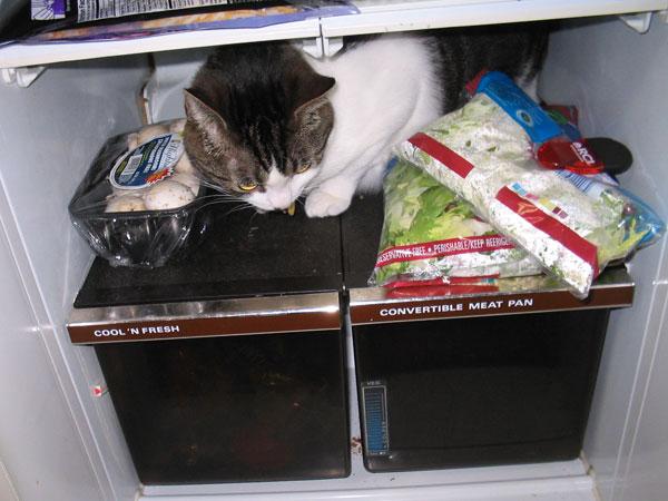Random fridge inspection