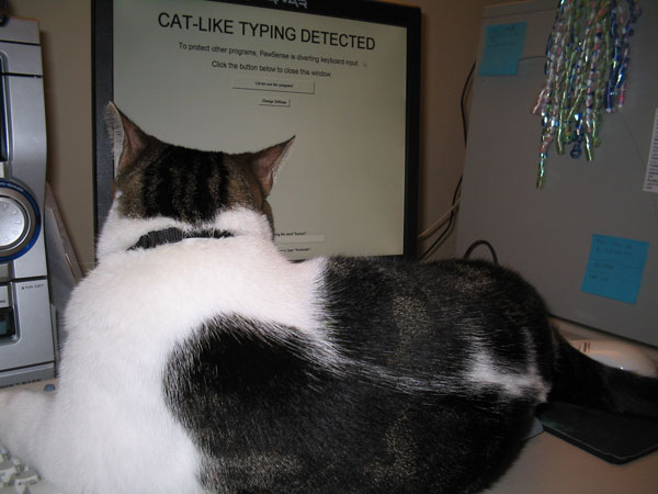 Cat-like typing detected