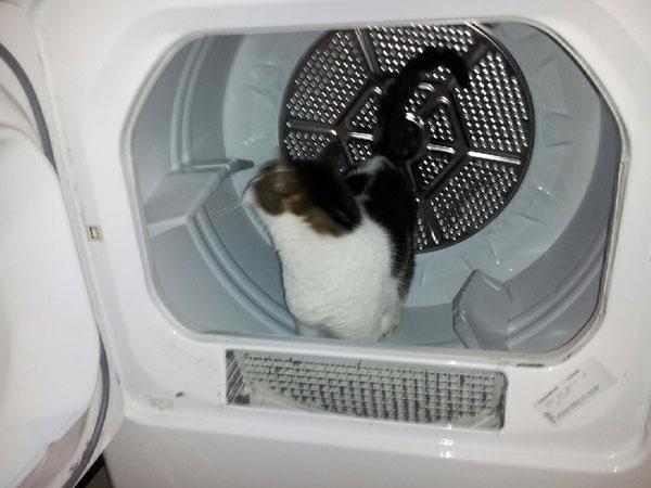 Krupke in the washing machine