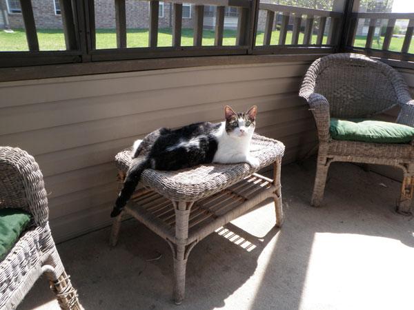 Krupke on the porch