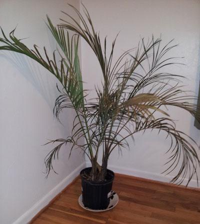 Palm suicide