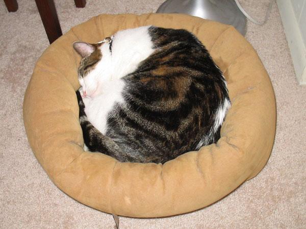 Krupke curled up in bed