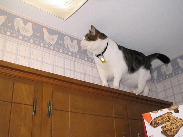 Krupke balancing act