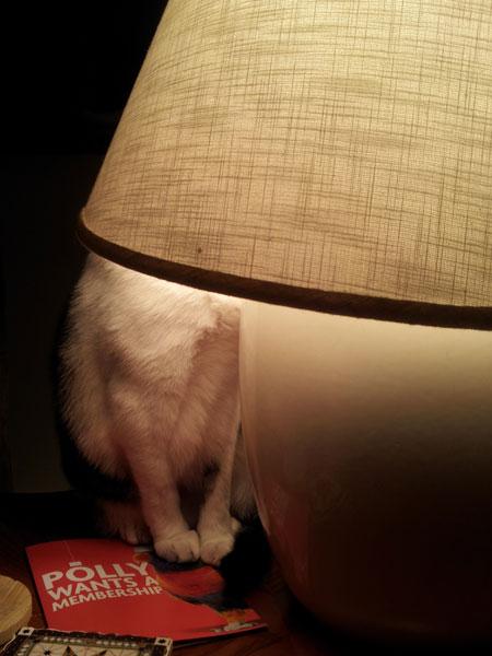 Krupke under the lamp